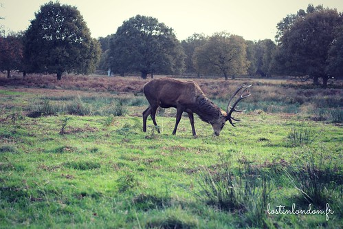 cerf londres richmond