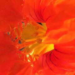 Excelente inicio de semana! NEM Mood NEM Painterly Nature_collection Flowerporn