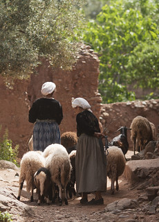 Minding goats in Atlas mountains