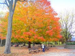 Concert Grove. Autumn