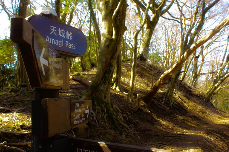 2014-03-31_00057_伊豆稜線トレイル.jpg