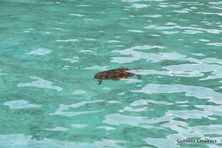 Palawan-turtle.jpg