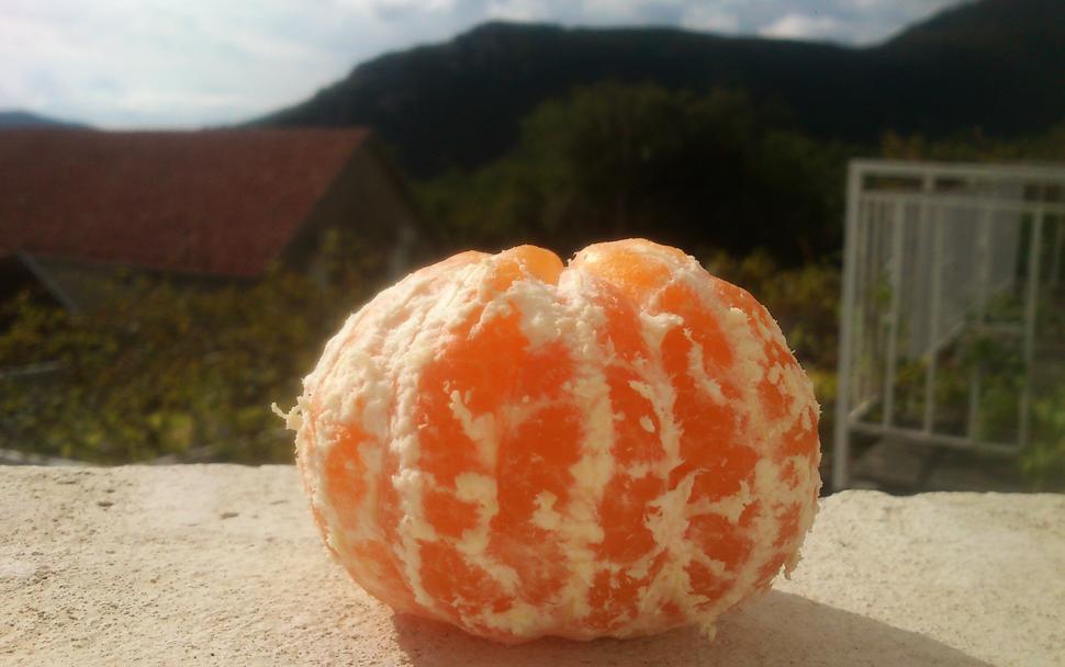 Блог о жизни в Черногории. Погода в ноябре в Черногории, мандаринки