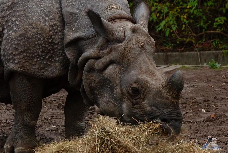 Zoo Berlin 07.12.2014 9