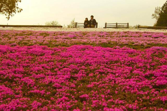 2014-04-19_00598_美の山.jpg