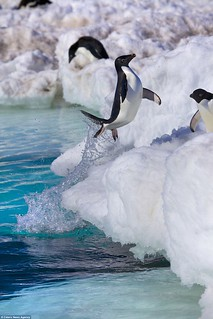 penguin-jump001