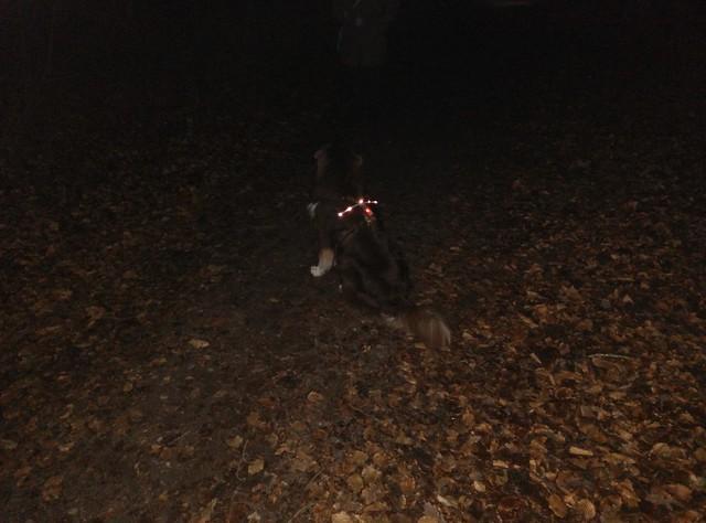 Hundeblinklicht