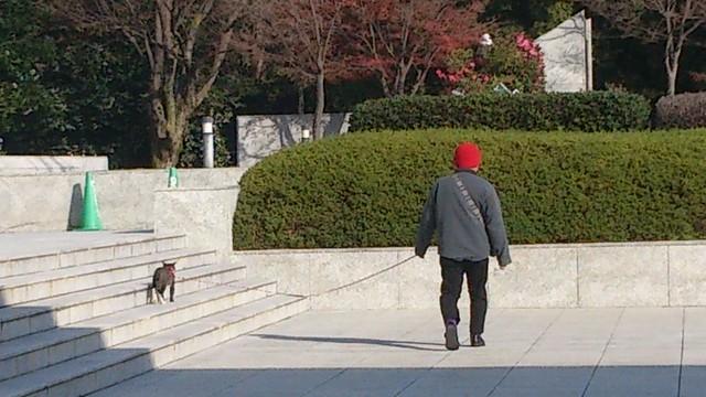 猫と散歩してる人