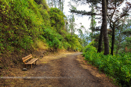 road park trees winter naturaleza tree verde green southamerica nature forest canon bench arbol quito ecuador solitude camino hiking path paseo invierno lonely banca guapulo canon6d