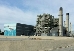 Contrast: Whales at the Power Plant