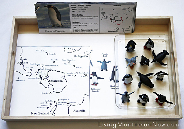 Penguin Distribution Tray