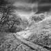 Der Weg in den Wald - Way to the forest. by Thdenz