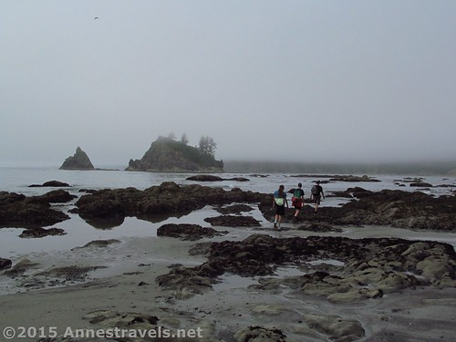 Hiking back along the beach north of Strawberry Point, Olympic National Park, Washington
