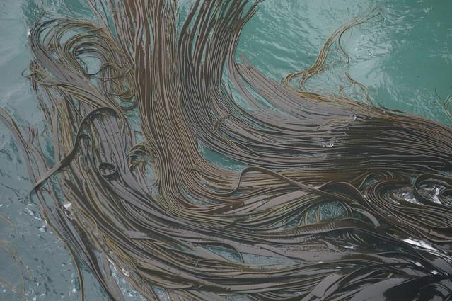 Hair-like seaweed