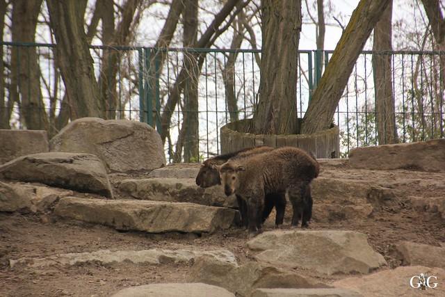 Besuch Tierpark Friedrichsfelde 17.04.201671