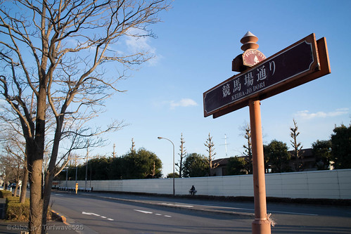 20160207 東京競馬場 競馬場通り / Tokyo R.C.