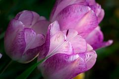 Spring Campus Flowers-22