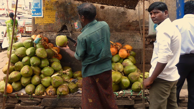 India - Tamil Nadu - Madurai - Coconut Seller