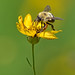 Bee by Bob Gilley