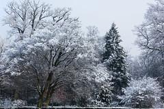 Bomen - Jeroen Gosse -16.jpg