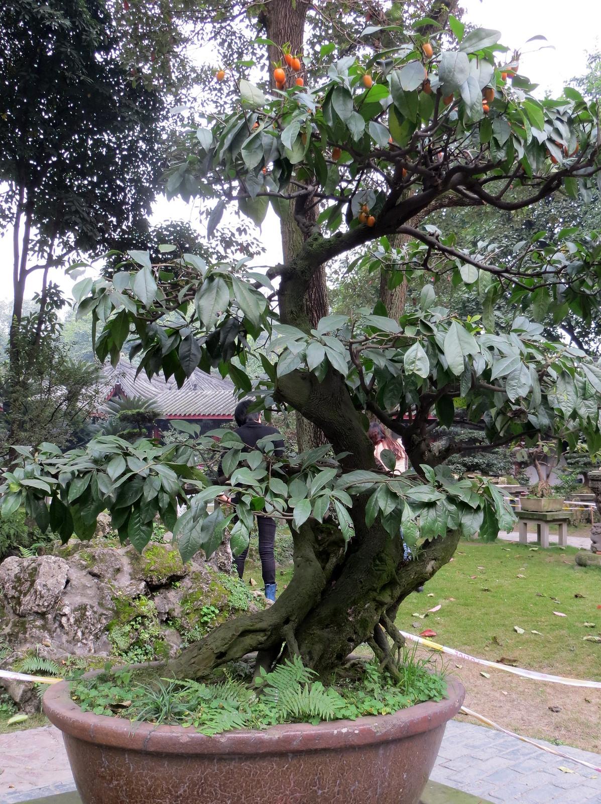 Kiina 2012 410