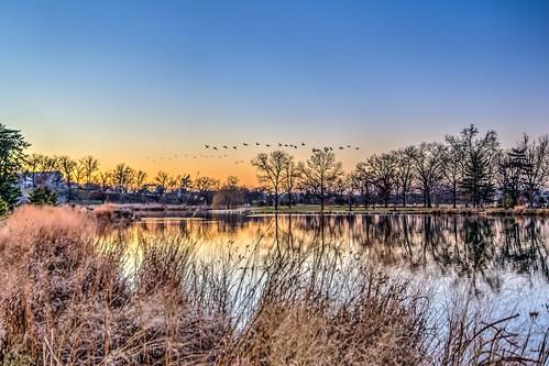 winter sunset reflection geotagged geese stlouis saintlouis forestpark 2014 postdispachlake