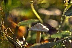 Shiny Fungus