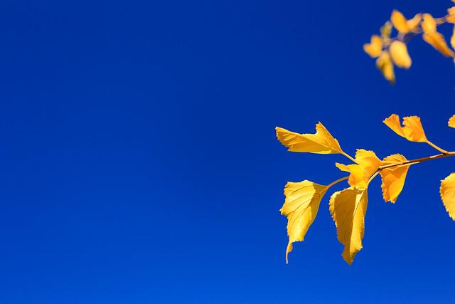 Autumn leaves & blue sky