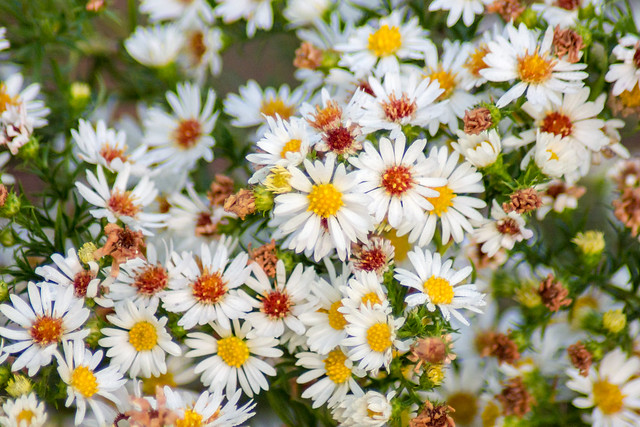 Flowers, Wildflowers, Floral, White
