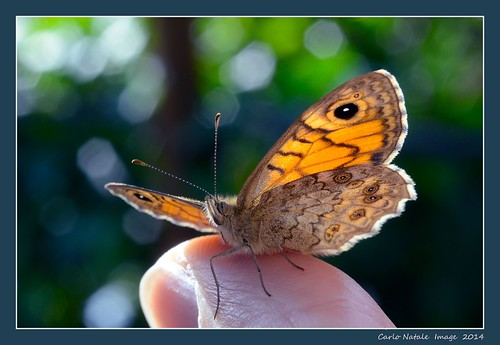 Butterfly on my hand