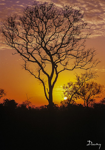 sunset sun silhouette soleil lumière ombre nuit feu sénégal