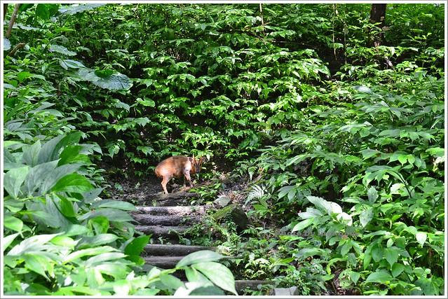 聖母山莊聖母登山步道宜蘭礁溪013-DSC_6644