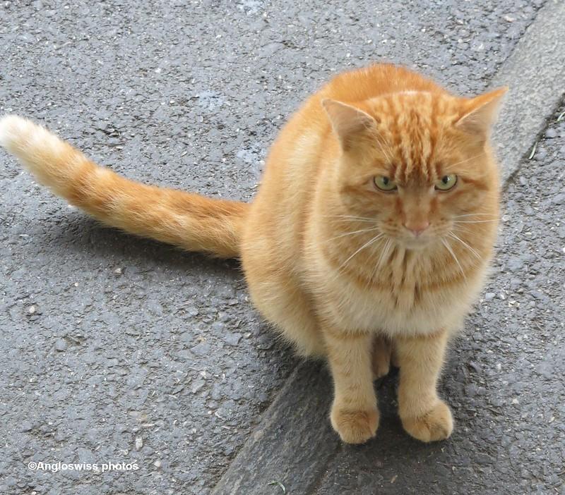 Migros Cat