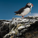Blue sky Puffin {Explore} by jerry_lake