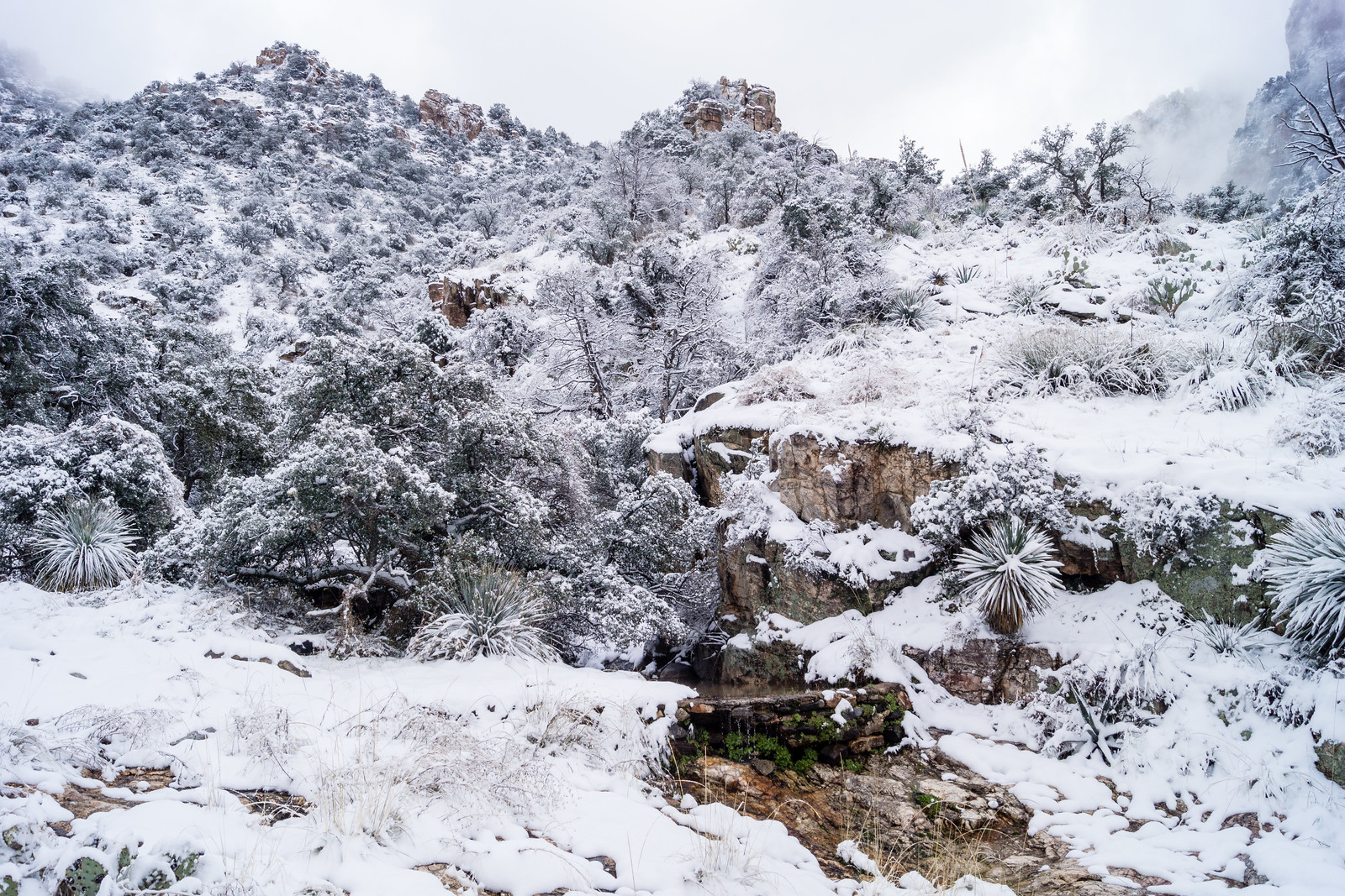 1501 Snow around the Second Dam on the Pima Canyon Trail