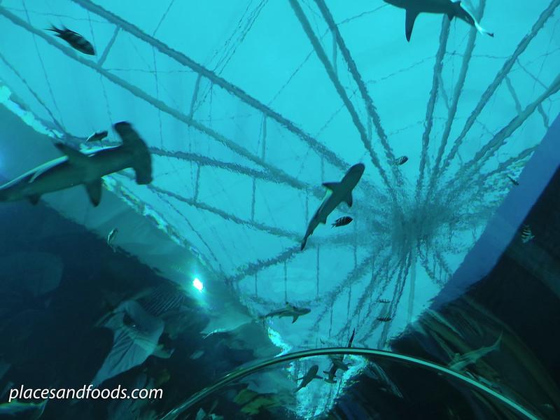 sea aquarium tube sharks