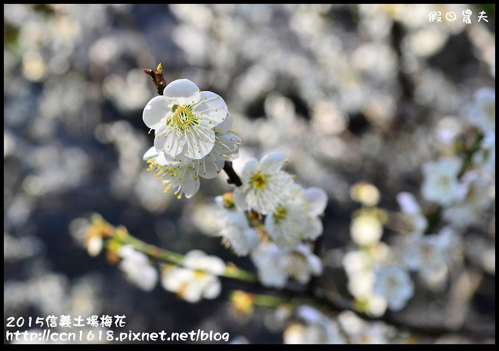 2015信義土場梅花DSC_9337
