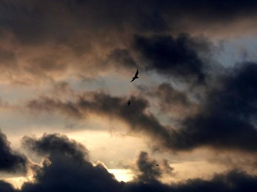 blue sky color colour clouds river germany de gulls himmel wolken bremen weser blau fluss möwen stormclouds sturmwolken riverweser flussweser sturmfelix stormfelix thedayafterthestormfelix dertagnachdemsturmfelix