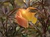 Hidden tulip