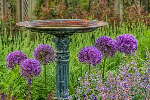 flower birdbath biltmoreestate