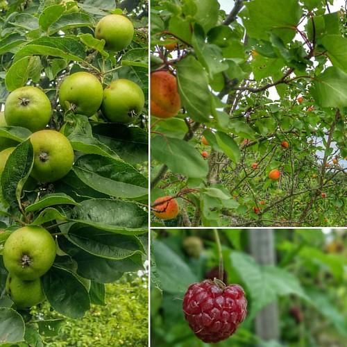 Frutos de verano...!