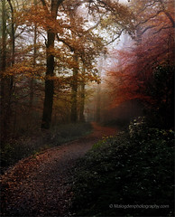 Pinfield Woods
