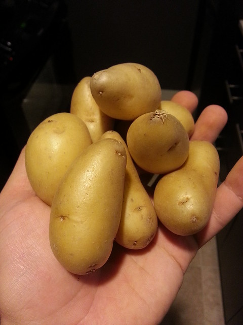 Fingerling - The Little Potato Company