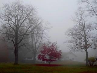 Morning Autumn Fog