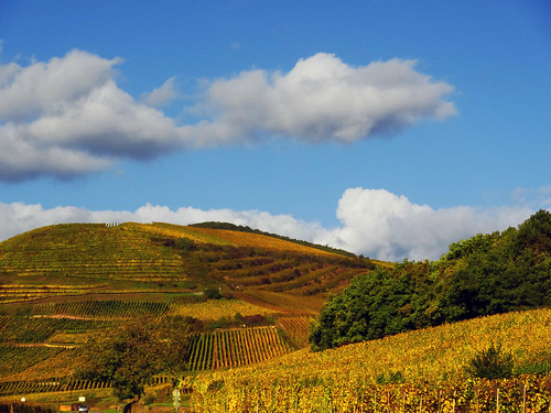 autumn france fall clouds automne vineyard europe alsace nuages vignes hautrhin niedermorschwihr michelemp