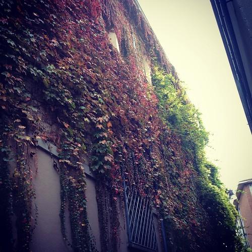 I colori dell'autunno #forli #giriingiro #viaggioinromagna #autunno #fall #autumn