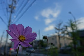 The cosmos in winter(One scene of commuting 2014/12 No.8).
