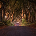 the dark hedges by Dennis_F