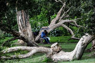 Sri Lanka. Nuwara Eliya. Victoria Park.