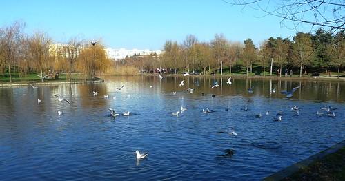 park lake seagull romania bucharest titanpark